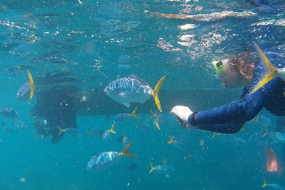 Voyage en Australie : les meilleures destinations de plongée sous-marine