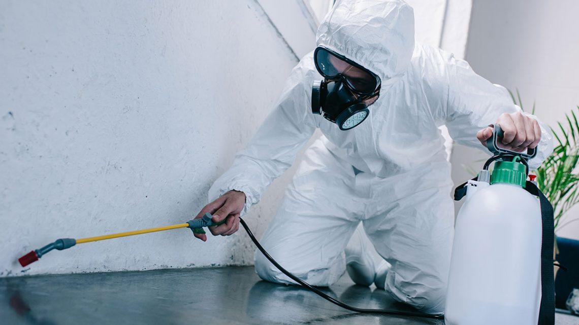 Quelques étapes à suivre pour choisir un professionnel exterminateur des nuisibles
