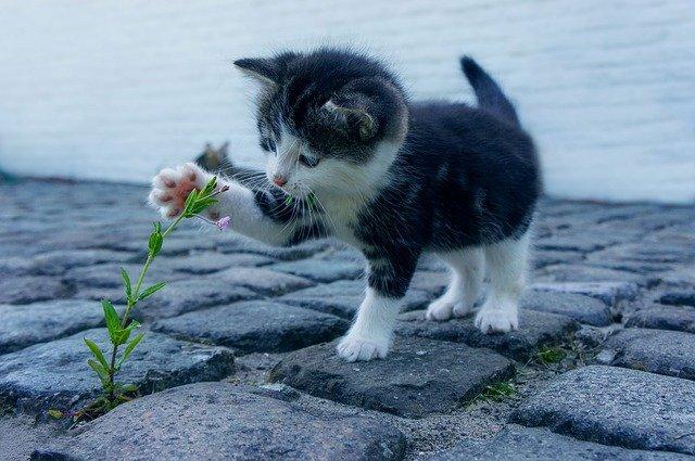 Choisir une pension pour chat